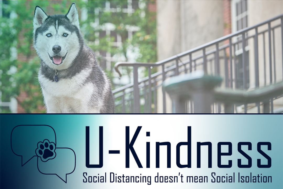 "Link to U-Kindness website. Photo of Jonathan the Husky with text that reads ""U-Kindness Social Distancing doesn't mean Social Isolation."""
